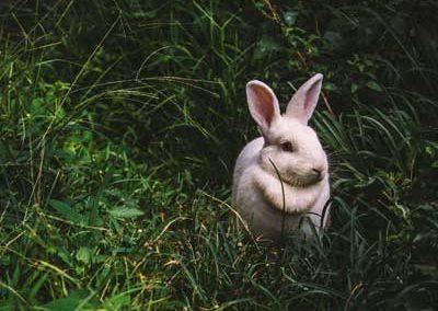 klarakterstark-hoobys-kaninchen
